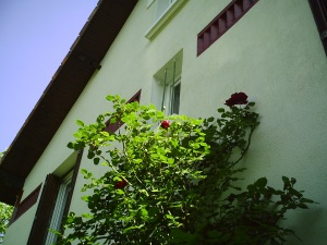 Notre maison 22.04.2007 014