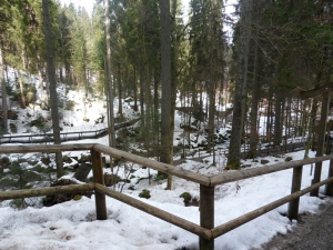 3a.Schwarzwald-(14)