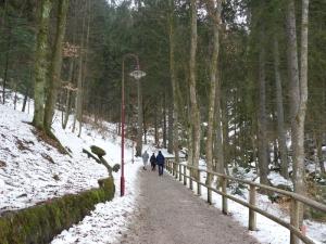 3a.Schwarzwald-(2)