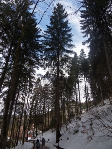 3a.Schwarzwald-(16)
