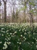 Springtime ! (2)