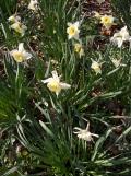 Springtime ! (3)