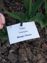Tulipe-Mania (104)