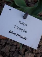 Tulipe-Mania (115)