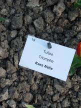 Tulipe-Mania (127)