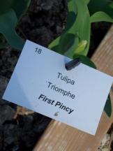 Tulipe-Mania (131)