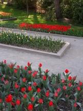 Tulipe-Mania (161)