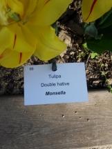 Tulipe-Mania (176)
