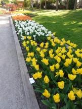 Tulipe-Mania (228)