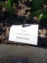 Tulipe-Mania (50)
