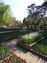 Tulipe-Mania (54)