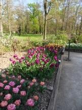Tulipe-Mania (58)