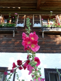 Am Attersee (47)