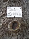 Arboretum Chèvreloup (10)