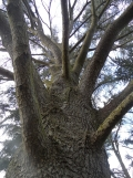 Arboretum Chèvreloup (11)
