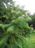 Arboretum Chèvreloup (17)