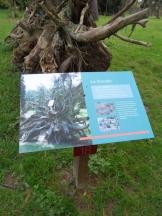 Arboretum Chèvreloup (20)