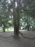 Arboretum Chèvreloup (21)
