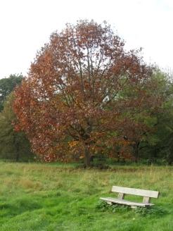 Arboretum Chèvreloup (26)