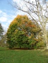 Arboretum Chèvreloup (6)