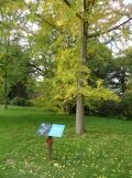 Arboretum Chèvreloup (8)