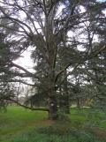 Arboretum Chèvreloup (9)