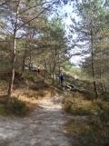 Fontainebleau - Les Trois Pignons (22)