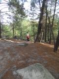 Fontainebleau - Les Trois Pignons (24)