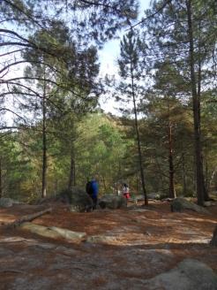 Fontainebleau - Les Trois Pignons (26)