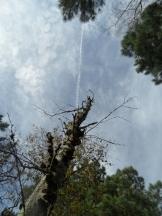 Fontainebleau - Les Trois Pignons (33)