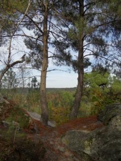 Fontainebleau - Les Trois Pignons (39)