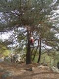 Fontainebleau - Les Trois Pignons (48)