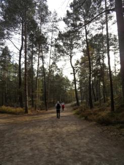 Fontainebleau - Les Trois Pignons (58)