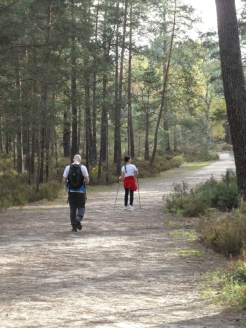 Fontainebleau - Les Trois Pignons (59)