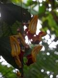1001 Orchidées .. (14)