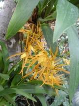 1001 Orchidées .. (18)