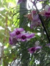 1001 Orchidées .. (20)