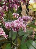 1001 Orchidées .. (30)