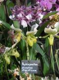 1001 Orchidées .. (34)