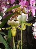1001 Orchidées .. (35)