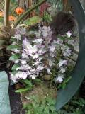 1001 Orchidées .. (37)