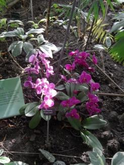 1001 Orchidées .. (38)