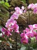 1001 Orchidées .. (40)