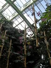 1001 Orchidées .. (45)