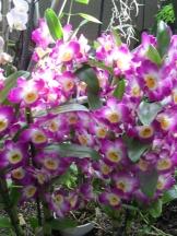 1001 Orchidées .. (46)