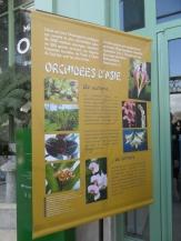 1001 Orchidées .. (5)