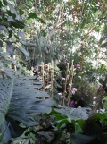 1001 Orchidées .. (50)