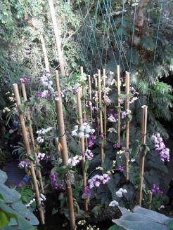 1001 Orchidées .. (52)