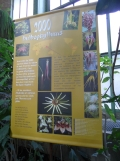1001 Orchidées .. (60)