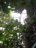 1001 Orchidées .. (61)